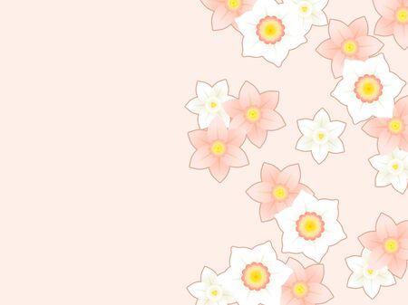 Pink daffodil illustration background