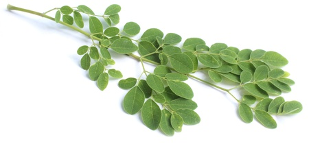 sajna: Edible moringa leaves over white background Stock Photo