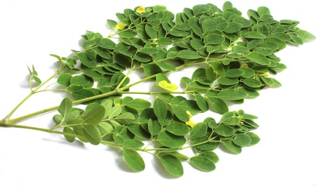Edible moringa leaves over white background Stock Photo - 20430592