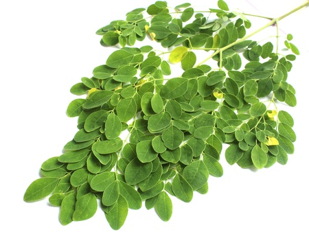 kelor: Edible moringa leaves over white background Stock Photo