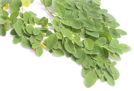 benzolive: Edible moringa leaves over white background Stock Photo