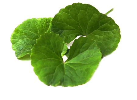 Herbal Thankuni leaves