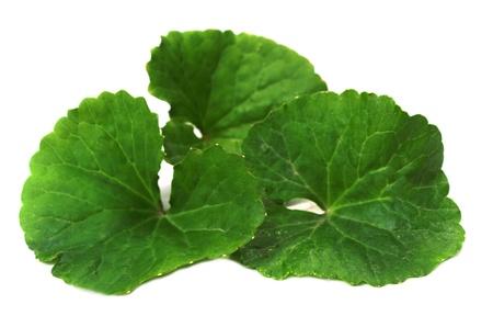 Herbal Thankuni leaves