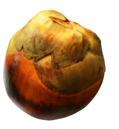 tal:  Borassus flabellifer or Tal fruit