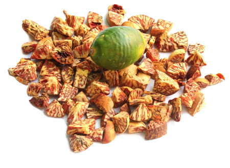 Betel Nut or Areca Nut  photo