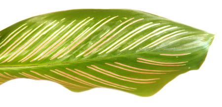 herbal decorative leaves photo