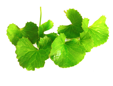 Medicinal thankuni leaves of Indian subcontinent Stock Photo
