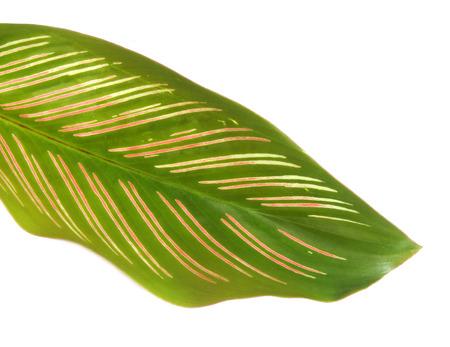 herbal leaves photo