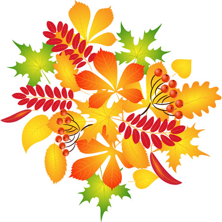 composition of autumn leaves for decoration