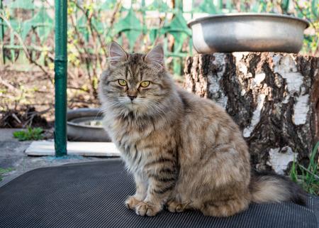 interrogative: Gato en el jard�n Foto de archivo