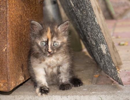 orphaned: Homeless little kitten. Foundling