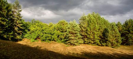suspenso: Día de otoño en el bosque. Sol y nubes de tormenta