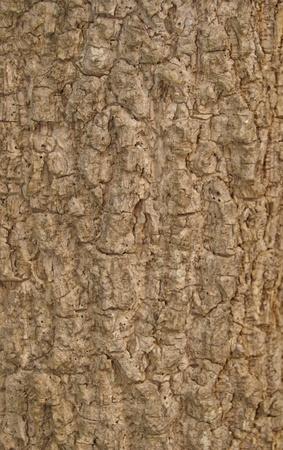 ot: bark ot tree