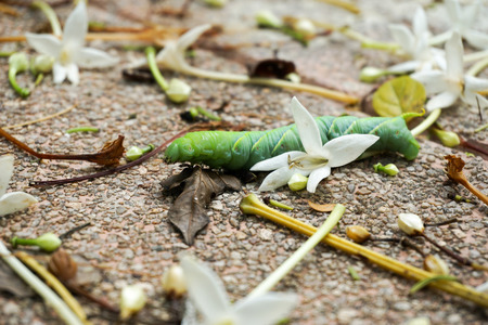 folwer: Green worm slither pass fall white folwer Stock Photo