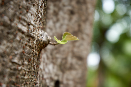 germinate: Leaflet germinate from tree will grow to tree branch
