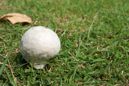 germinate: Mushroom germinate on ground with grass in sunny day