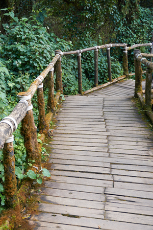 walk board: Wood walkway with rail lead to forest