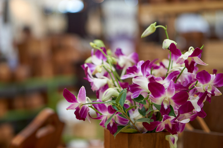 panicle: Panicle of orchid in wood vase with blurry background