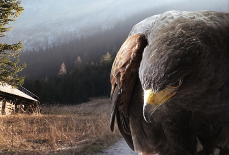 intent: Eagle against the mountains