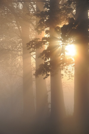 Stunning foggy landscape photo
