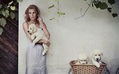 Young beauty and puppies in basket Stock Photo - 10827885