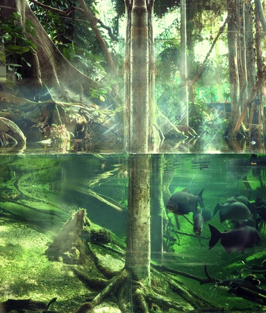 fish tank: Tropical jungle