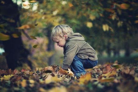 children playing with toys: Little boy and autumn leaves Stock Photo