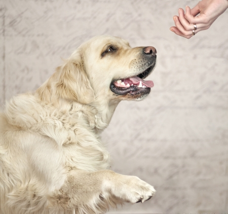 wanting: Master wanting to greet with friendly dog Stock Photo