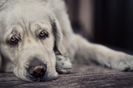 Sad dog waiting for busy master