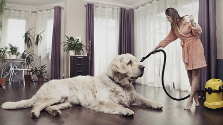 Young woman cleaning big cute dog photo