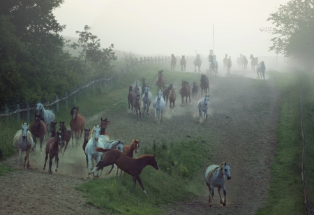 bevy: Bevy of strong horses running at the rular area