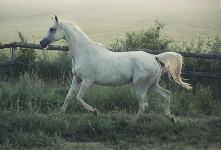 Picture of white horse with rular landscape in background photo