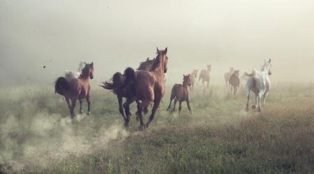午前中で牧草地の馬のグループ
