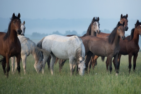 bevy: Bevy of wild horses on the meadow Stock Photo