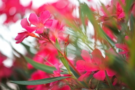 Photo of the pinky rural flowers photo