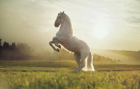 強いロイヤル ホワイト ホースの壮大な写真