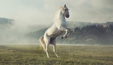 autumn horse: Strong white horse on the autumn green meadow Stock Photo