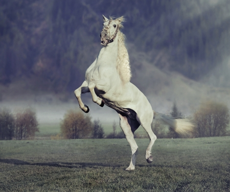 trotting: Majestic horse jumping on the green meadow with purple background Stock Photo