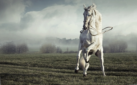 chestnut male: Fantastic picture of big and strong pure white horse