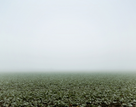 Green field at the autumn foggy day photo