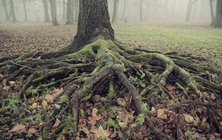presenting the old and long roots photo