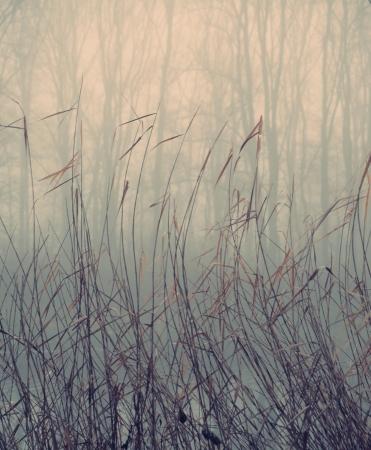 plantas acuaticas: Las plantas de agua en la ma�ana de oto�o de niebla