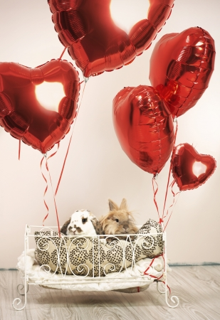 Two rabbits in valentines scene with balloons photo