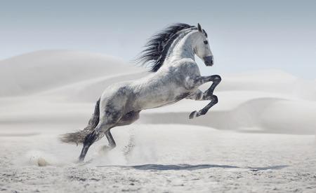Foto presentatie van de galopperende witte pony Stockfoto
