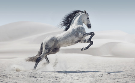 Picture presenting the galloping white pony