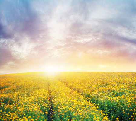thee: Beautiful sunset over thee colorful meadow