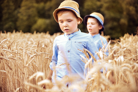 august: Two little brothers walking among corn