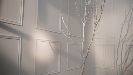 dream body: Thin bright tree in the white room