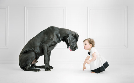 black dog: Cute little girl posing against a big dog Stock Photo