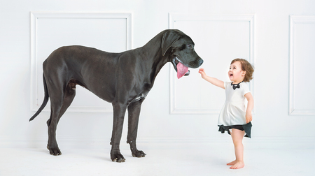 black dog: Cute little girl playing with a huge black dog Stock Photo